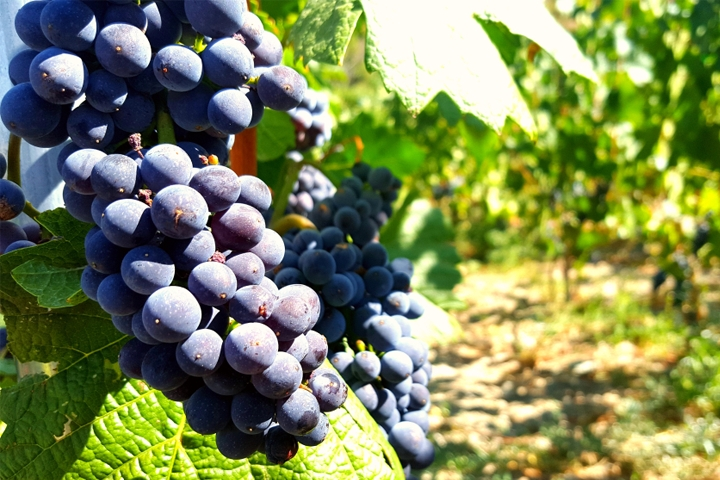 Wine is also an expression of the land where the plants are rooted